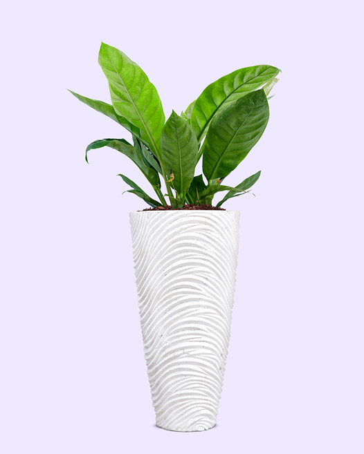 Graphic vase white washed met anthurium jungle king