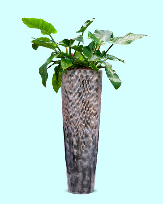 Luxe lite bronze universe vase met philodendron imperial green