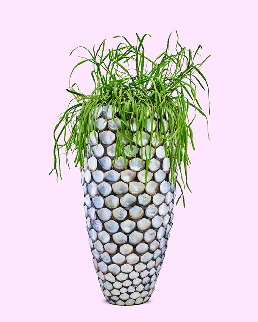 Pot mother of pearl blue met rhipsalis micrantha