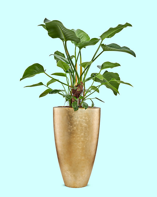 Vita vase champagne matt met philodendron green beauty